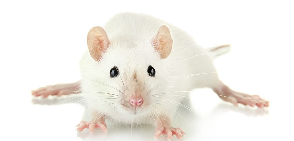 New Small Molecule Used as Therapy Seen to Ease Gaucher Symptoms in Mice