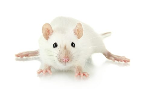 Early Gene Therapy Holds Promise to Treat Gaucher Disease, Mouse Study Shows