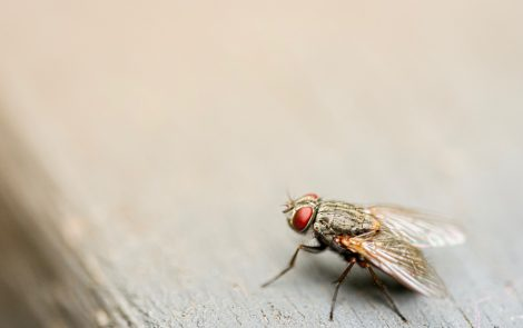 New Fly Model of Gaucher Disease May Improve Knowledge of Disease Mechanisms, Researchers Say